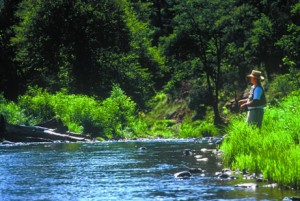 Peaceful, cool fishing in Arizona's White Mountains